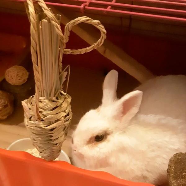 carotte pour lapin jouet